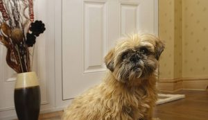 Dog in front of a white composite door